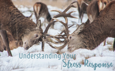 Understanding Your Body's Stress Response